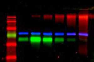 Protein- and Nucleic Acid Detection